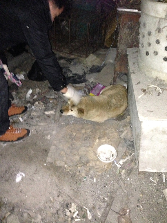 Sweet Stray Somang Rescued from South Korean Dog Meat Market