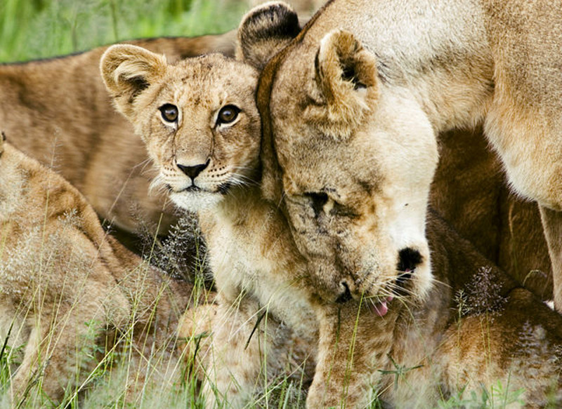 6 Animal Species With Strong Family Bonds
