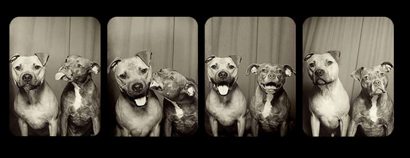 Invented Fear and Injustice We Wrongly Place on Pit Bulls