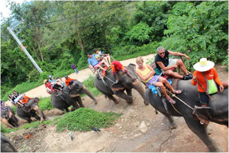 Thinking of Going Elephant Trekking This Summer? Here's What You Need to Know Before You Book!
