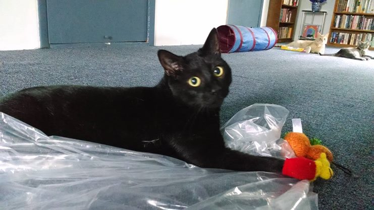 From Research Lab to Recovery, Xander the Cat Advocates for Lab Animals Everywhere!