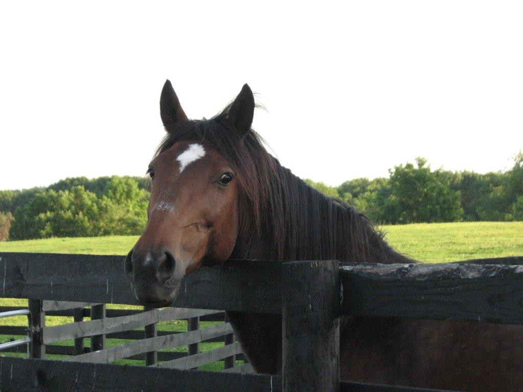 After Serving Seven Years as a Carriage Horse, Bobby II Gets a Lifelong Vacation at Safe Home Equine Sanctuary