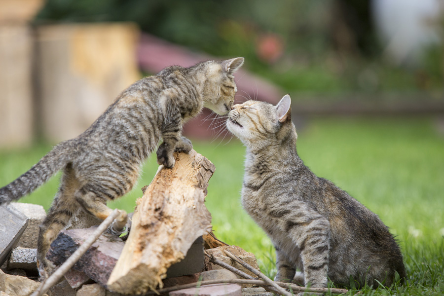 Jason Putsche Photography - Comm Cats 12
