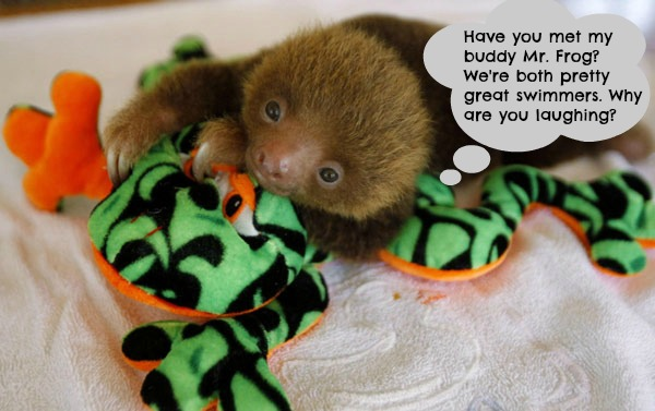 These Orphaned Baby Sloths are as Cute as They Come!