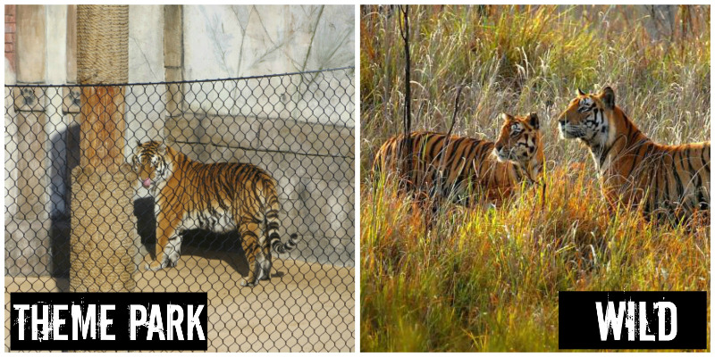 EXPOSED: Six Flags Discovery Kingdom: Cruelty Isn't Amusement!