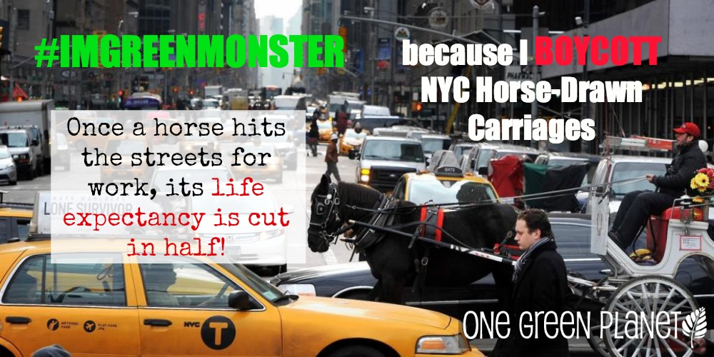 EXPOSED! NYC Carriage Horses: The Worst Tourist Attraction in the Greatest City