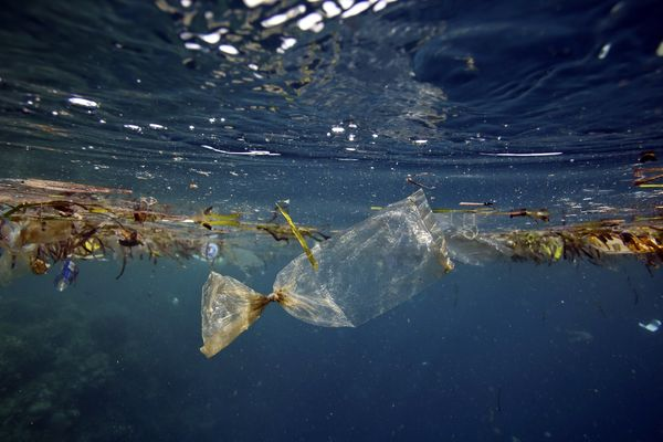 You Are What You Eat With: Why Saying Yes to Plastic Straws is a Big NO for the Planet