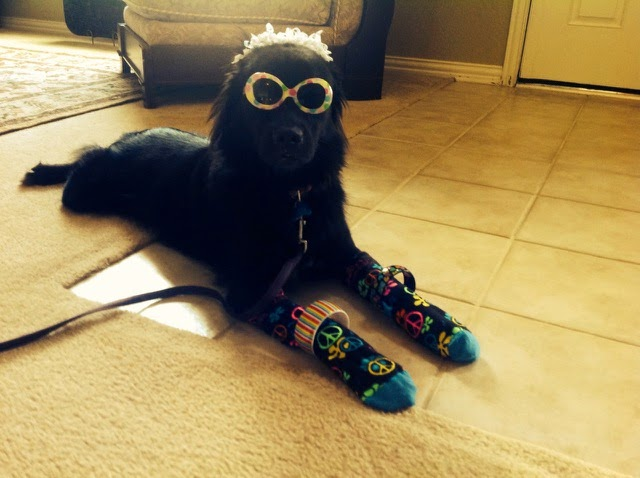 Fraggle the Rescue Dog Loves to Play Dress Up