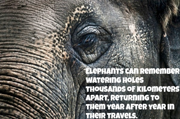 5 Reasons Why Holding an Elephant in Captivity Goes Against Everything Natural
