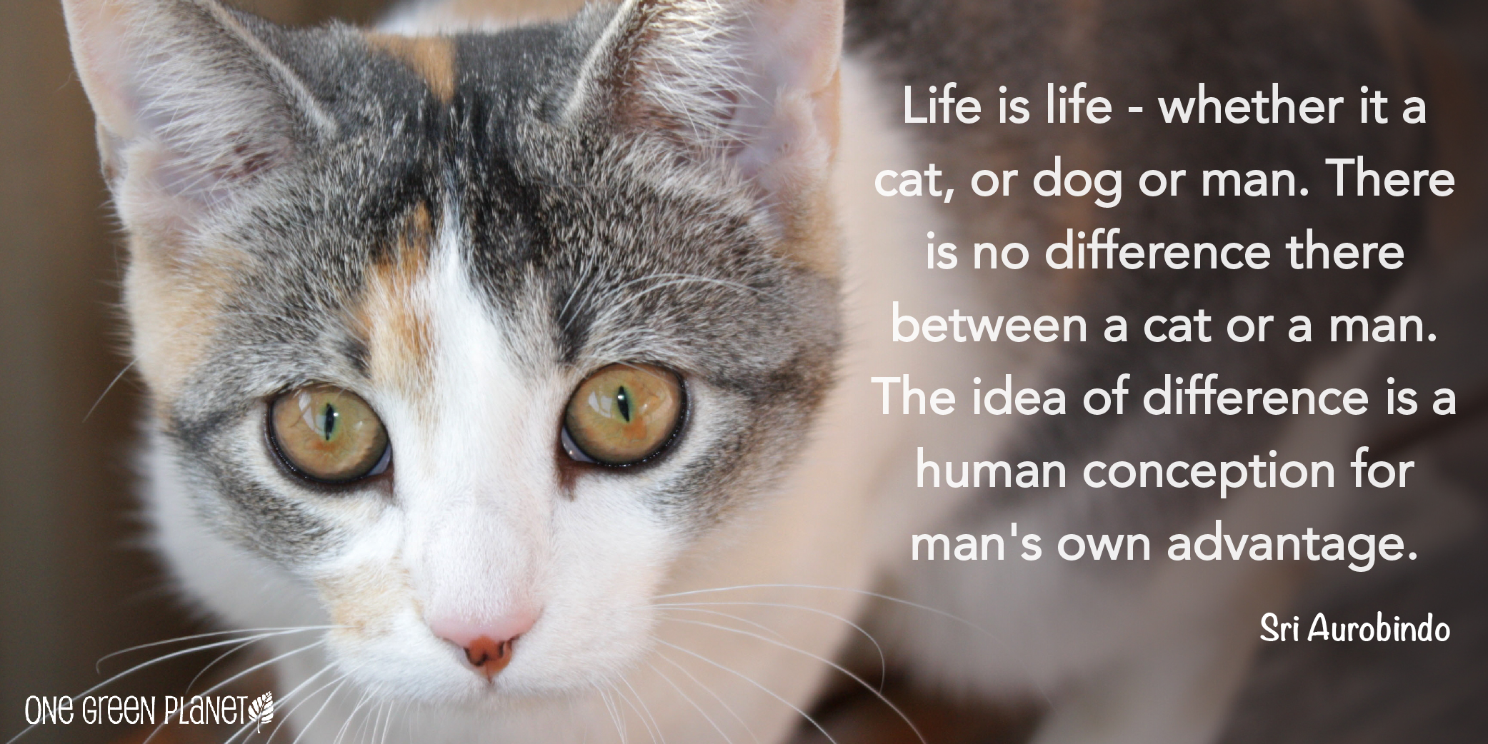 Animals Quotes 10 Quotes That Will Inspire You To Fight For Animals  One Green
