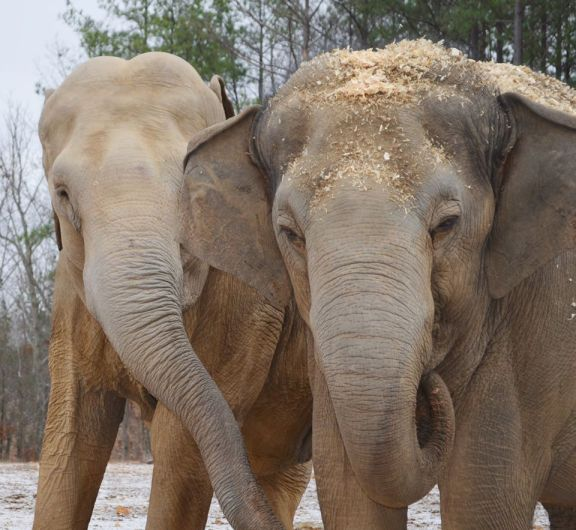 There is an Exotic Pet Epidemic in the U.S.! These 10 Awesome Sanctuaries Are Working to End This
