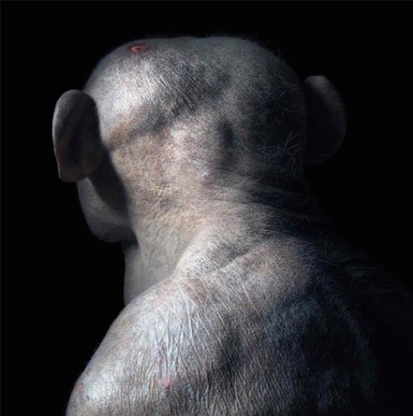 Photographer Takes Stunningly Simple Photos to Show Human and Animal Similarities