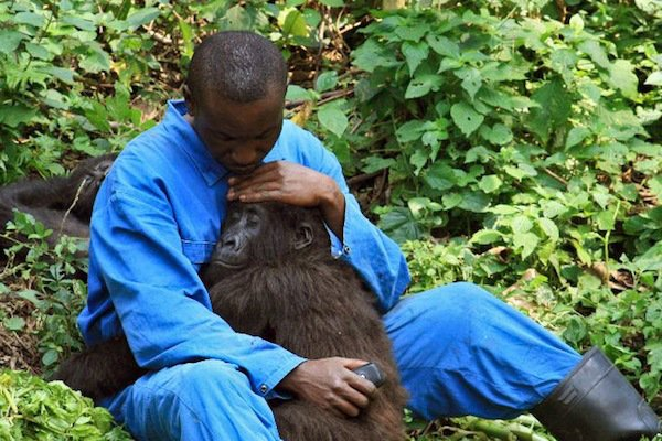 Oil Explorers: Keep your Hands off Virunga, Africa's Oldest National Park