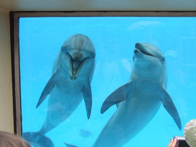 The Paradox of the Dolphin's Smile: How the Captivity Industry Capitalizes on Dolphin's Misery