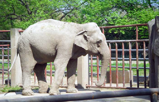 Are China's Zoos Really 'Acceptable' Places for Zimbabwe's Wild Baby Elephants?