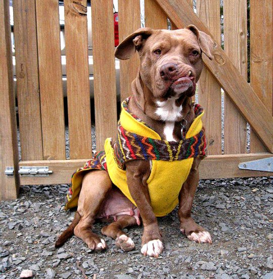 5 Former Fighting Dogs Who Are Now Living Happily in a Forever Home