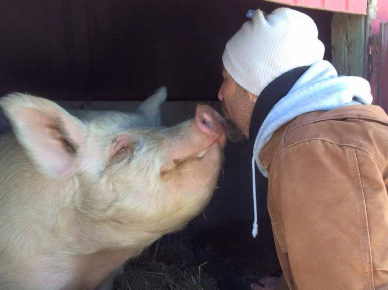 10 Farm Sanctuaries in the U.S. That Are Great For Volunteering