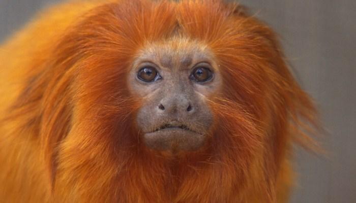 9 organizations fighting the illegal wildlife trade