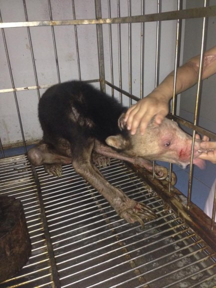 The Story of Kwan the Sun Bear Who Never Saw the Sun Shows Us the Dark Side of the Exotic Pet Trade