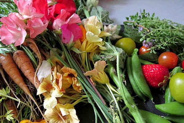 Grow-An-Edible-Garden