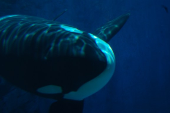 The 12 Worst Things to Happen to SeaWorld Since the Release of Blackfish