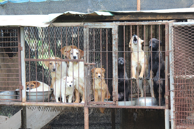 "How South Korea Manages to ""Farm"" Dogs for Consumption Will Shock You"