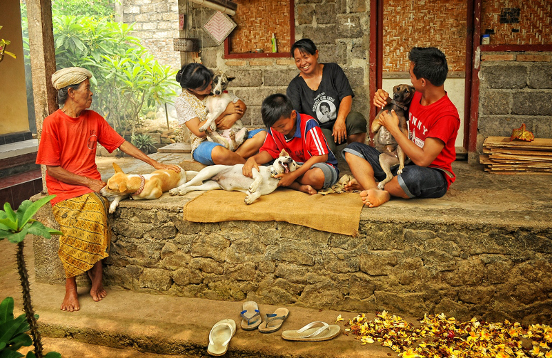 How Disease and the Dog Meat Trade Threatens the Survival of Bali's Heritage Dog