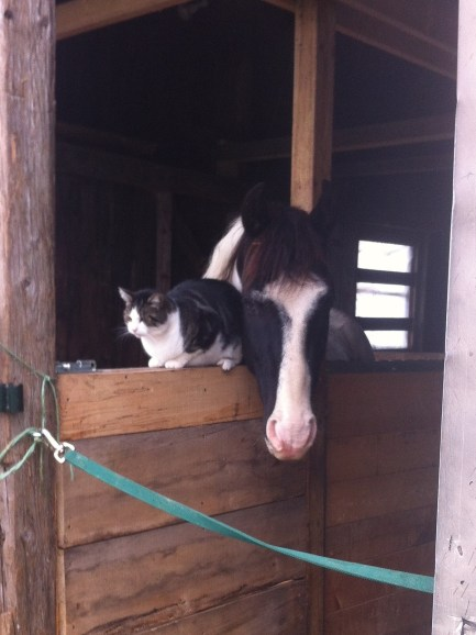 Cowboy and his feline companion, Patch at Penny Lane Farm Sanctuary