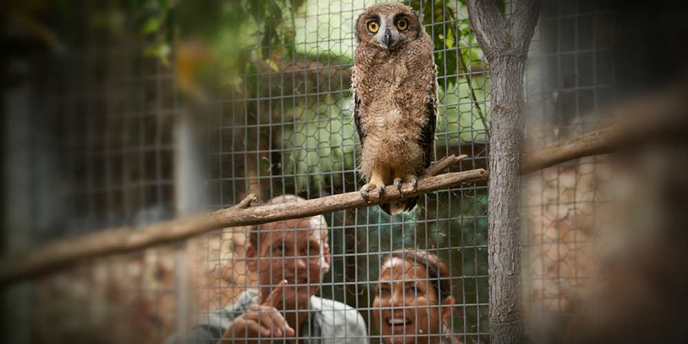 Things We Need To Stop Telling Ourselves About Zoos One Green - 17 zoo animals happy see visitors