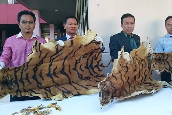 Malaysia Wildlife Bust