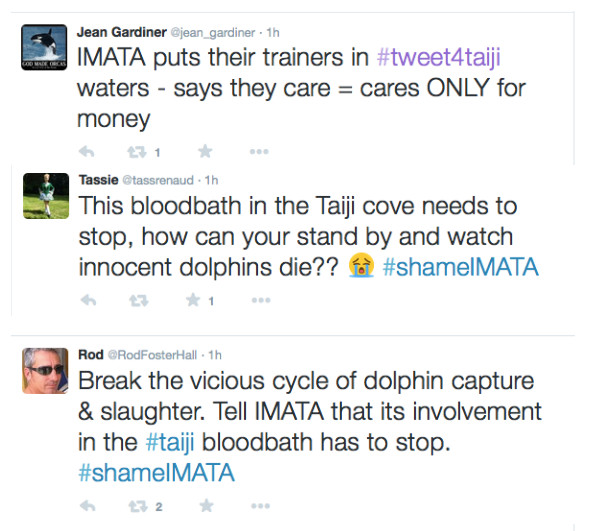 IMATA trainers under fire for involvement in Taiji dolphin hunts