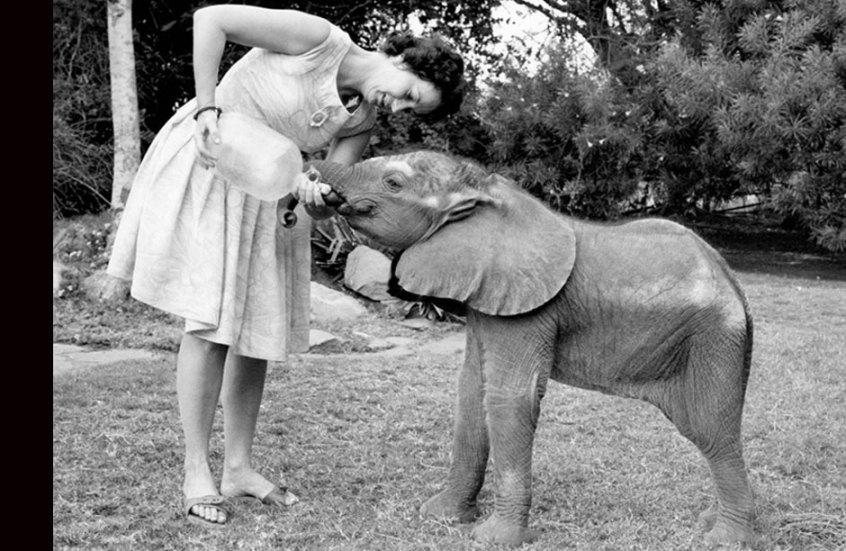 Dame Daphne Sheldrick: 81-Year-Old Conservationist, and One of The Elephants' Last Hopes