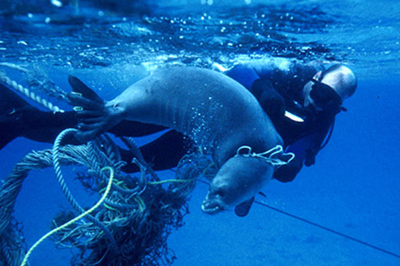 Here is the Kindest Action We Can Take to Help Marine Animals Today