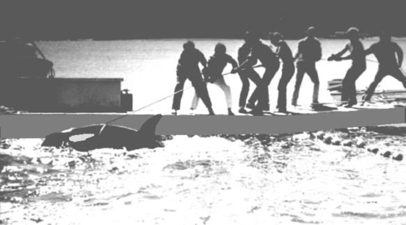 #EmptyTheTanks! This Shocking Photo Records the Moment Long-Suffering Orca Lolita Was Captured