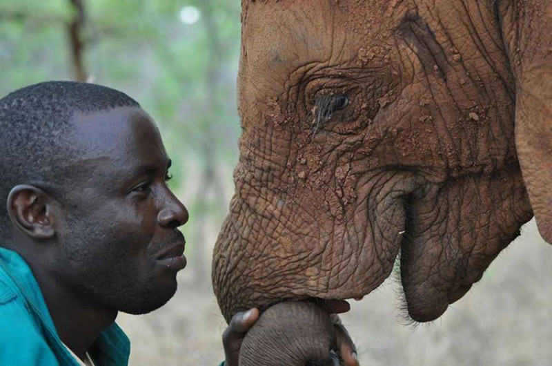 Beautiful Image Reveals How the Connection Between Humans and Elephants Ought to Be