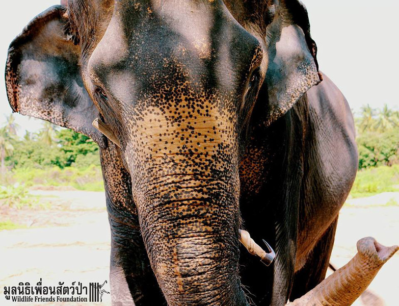 1792fcbcd1d6 This Rescued Elephant Used to Get Beaten With a Bull Hook – Now She ...