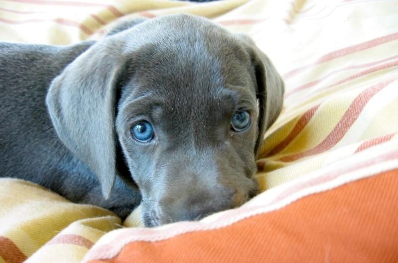Hemp Dog Bed Cover
