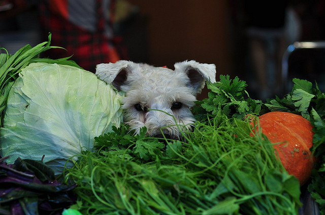 Good Reasons to Include Vegetables In Your Dog's Diet ...