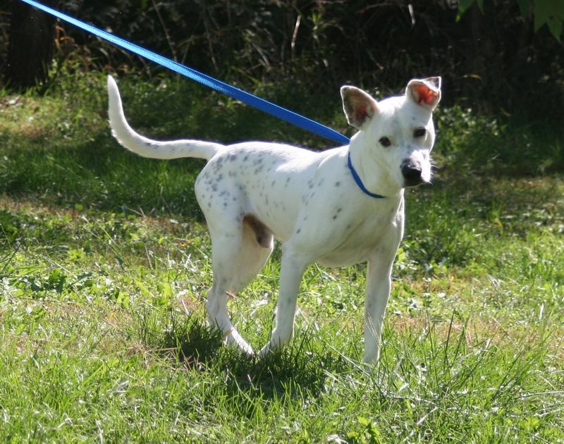 10 Awesome Mutts Looking For Forever Homes One Green Planet