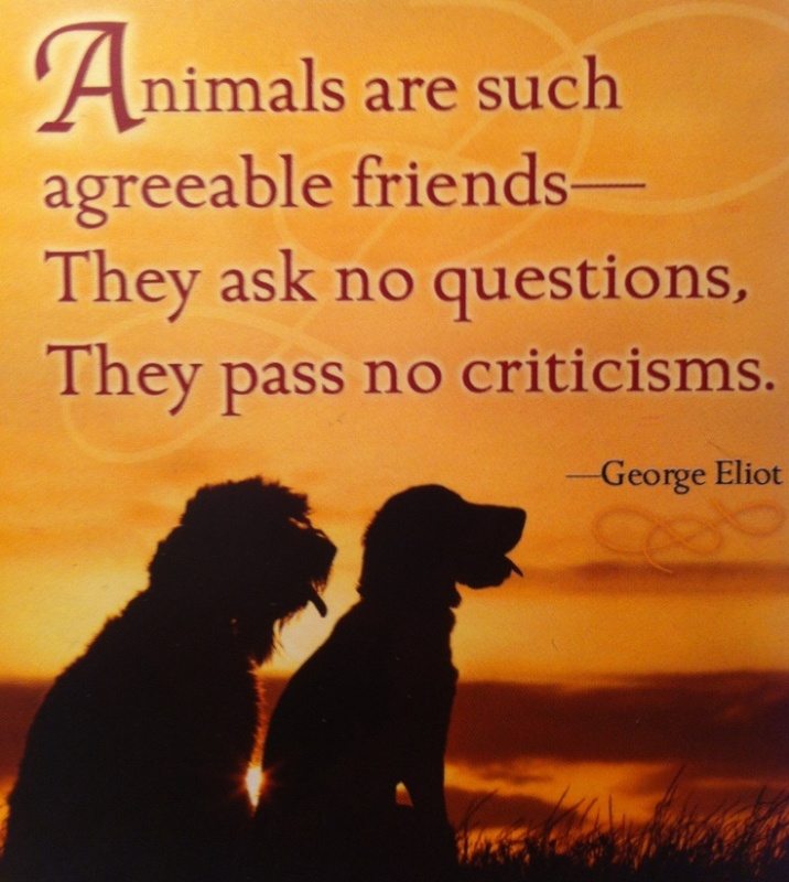 10 inspiring quotes about animals one green planet - Animal pak motivational quotes ...
