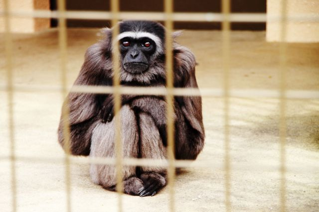 Top Misleading Claims Zoos Make One Green Planet - 17 zoo animals happy see visitors