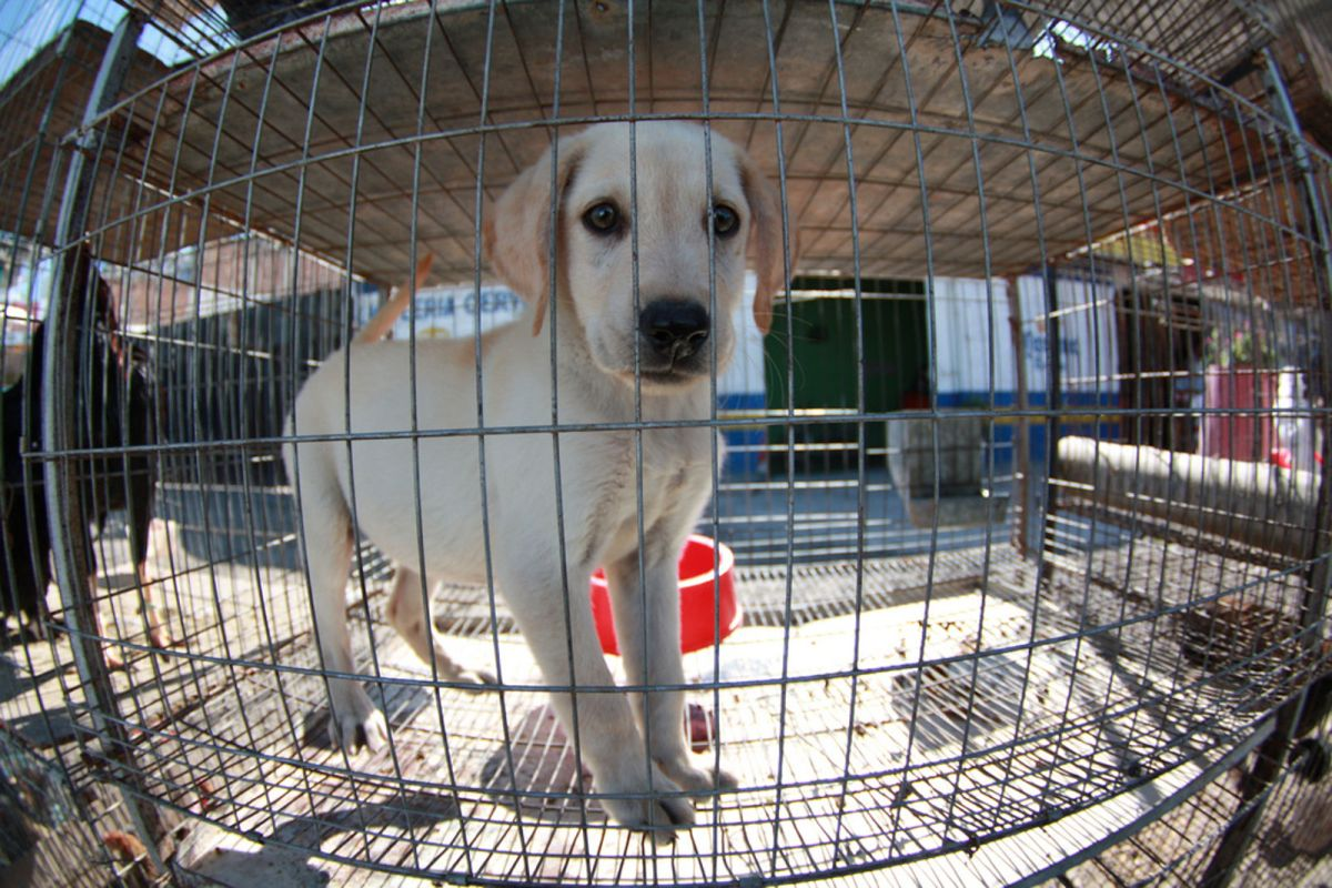 5 things you can do to help stop puppy mills one green planet