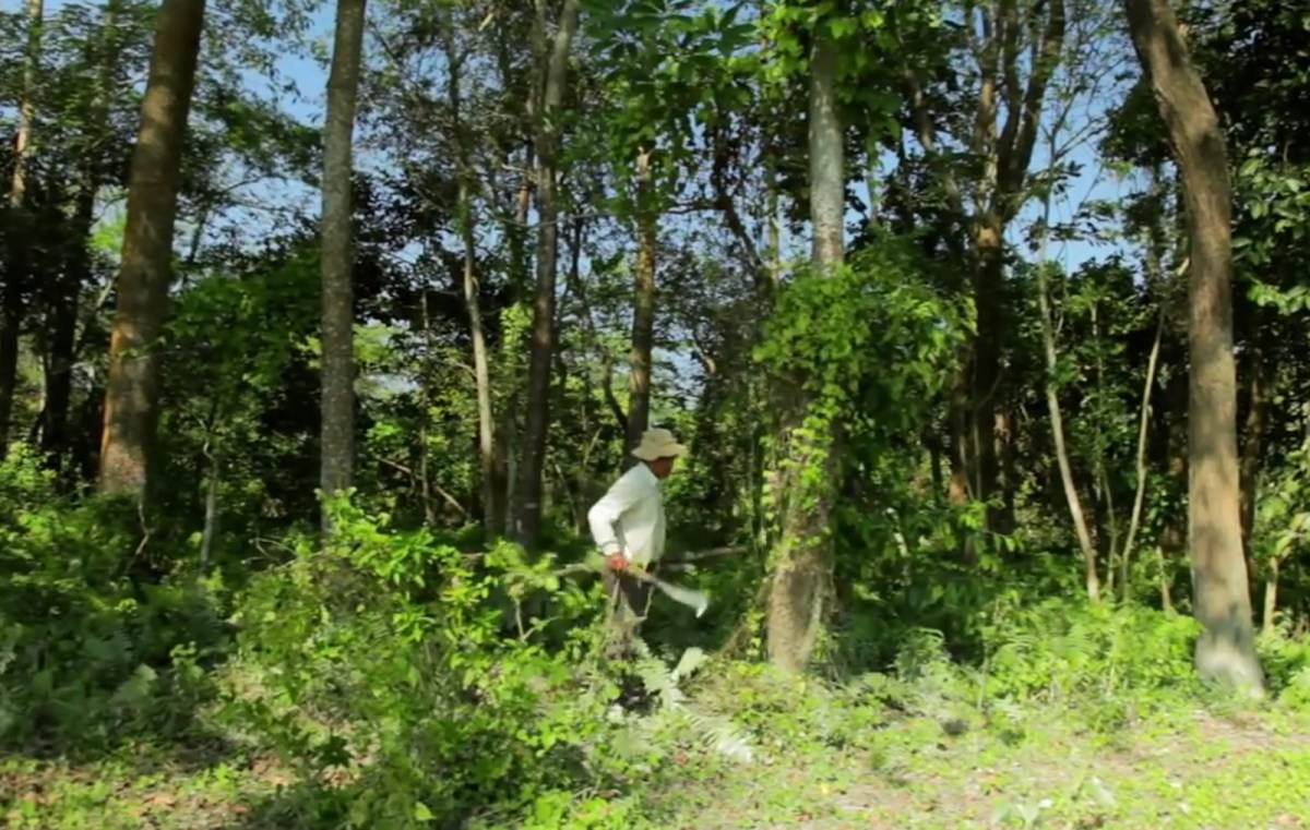 online dating safety tips pdf viewer: indian man single handedly plants entire forest