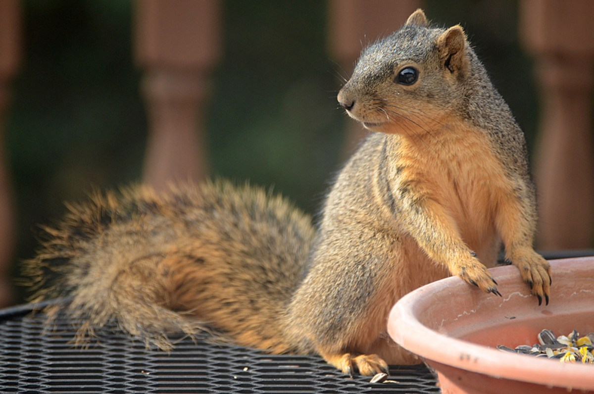 man builds adorable obstacle course for squirrels in his backyard