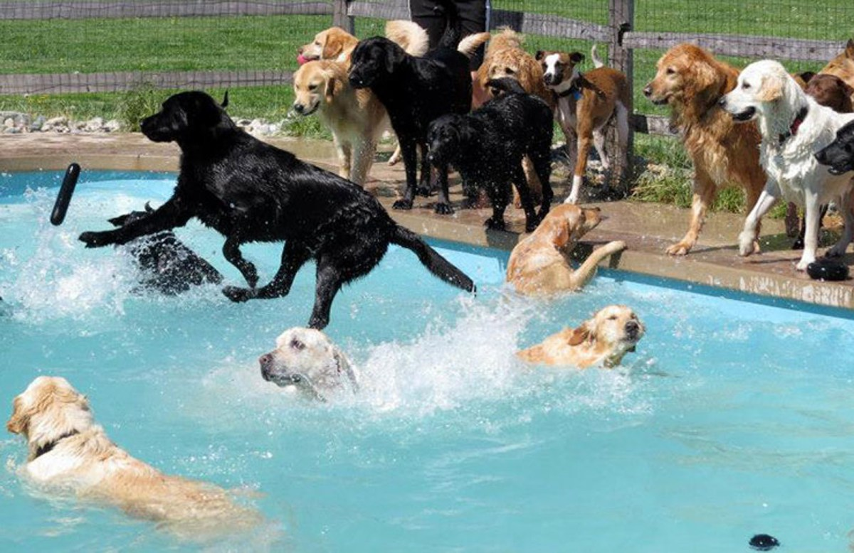 Watch the Happiest Dogs in the World Splash Around at a ...