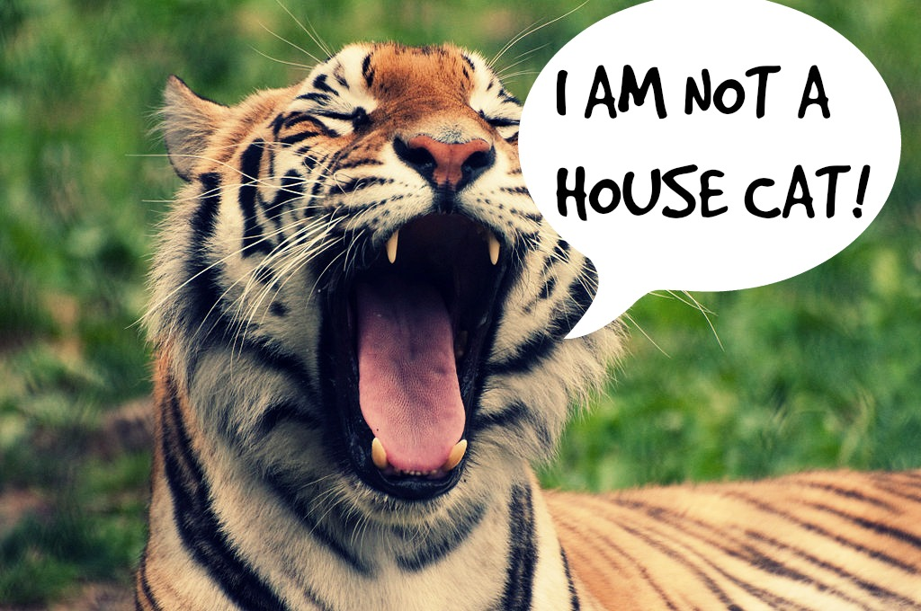 endangering captive exotic cats essay Argumentative essay  zoos also offer breeding programmes for endangered species of animals  neither should they be held captive by us human, whether it .