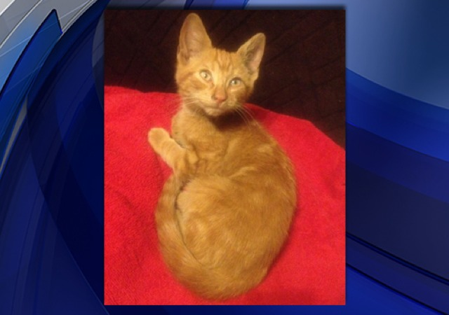 New York Cabbie Stops Traffic to Save Kitten on Highway ...