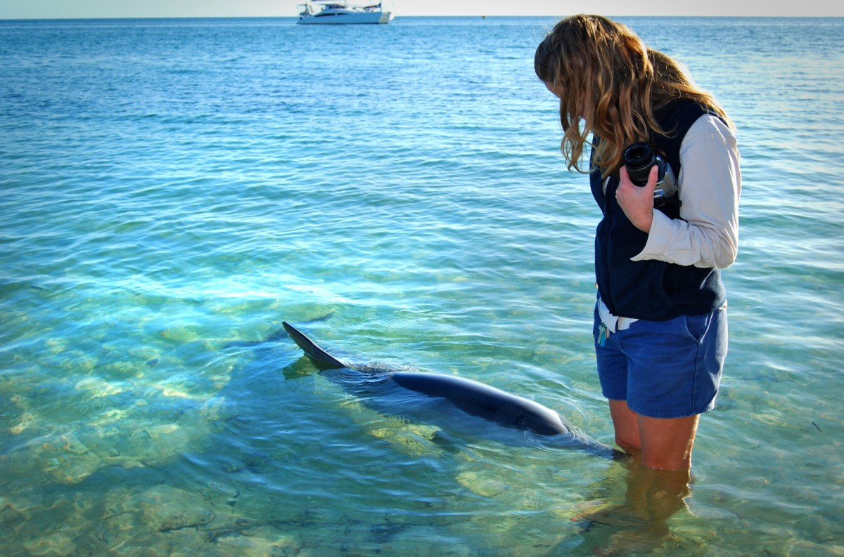 how the wild dolphin feeding industry threatens this species