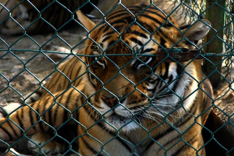 exotic animals shouldnt be pets essay