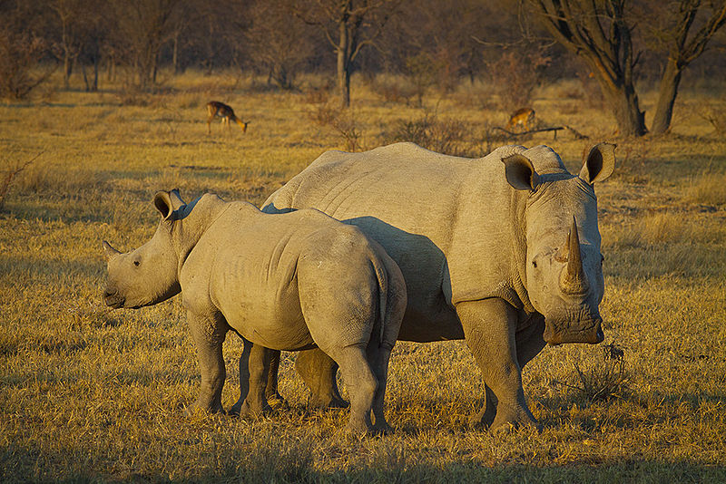 What Are the Main Causes of Poaching?